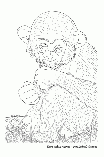 animal-coloring-pages-chimpanzee-550