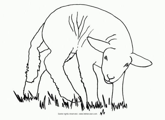 animals_sheep_lamb_coloring_page_550