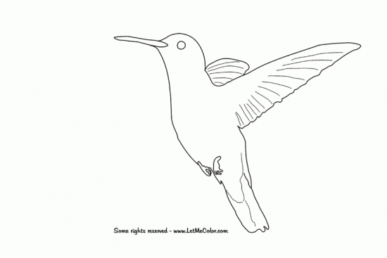 hummingbird_animals_coloring_page-550